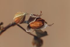 Langzaam verdwenen droevig nam de macro van het bloemclose-up toe Royalty-vrije Stock Foto