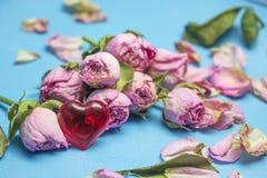 Langzaam verdwenen roze nam toe als symbool van afgelopen liefde en rood hart Royalty-vrije Stock Afbeeldingen