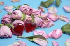 Langzaam verdwenen roze nam toe als symbool van afgelopen liefde en twee rode harten Stock Foto's
