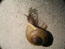 Langzame bewegende slak Stock Foto's
