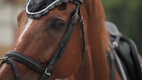 Langzame die motie van het het hoofdclose-up van een paard wordt geschoten stock videobeelden