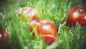 Langzame die motie van rode appel wordt geschoten die op het gras vallen stock footage