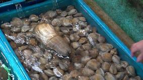 Langzame Motie Aziatische verkoper die Panopea-generosa verkoopt bij zeevruchtenmarkt Taiwan stock video