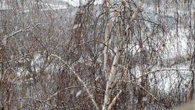 Langzame motie die van sneeuw op achtergrond van berk vallen stock footage