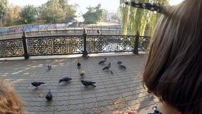 Langzame Motie Een kind in een park voedende duiven stock footage