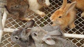 Langzame motie pluizige konijnen die zich in kooi bewegen stock footage