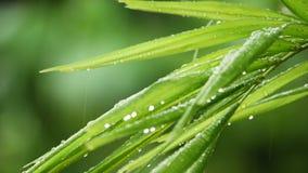 Langzame motie tropische regen stock footage