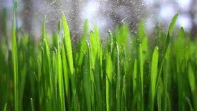 langzame motie van het regenen op gras stock video