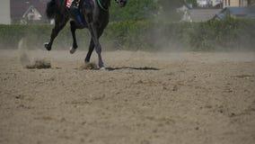 Langzame motie van paardenrennen stock video