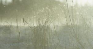 Langzame motie van strandgras tijdens de winteronweer stock videobeelden