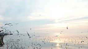 Langzame motie van velen vliegende zeemeeuw die voedsel in de lucht vangen stock footage