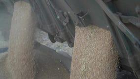 Langzame motielengte van tarwe het uitgieten van de vrachtwagen stock videobeelden