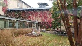 Langzame motiesneeuwval tijdens de herfst in een open plek binnen het gebouw stock videobeelden