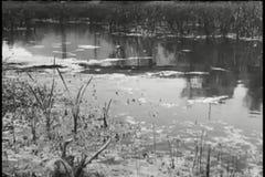 Langzame panning van moeras stock videobeelden