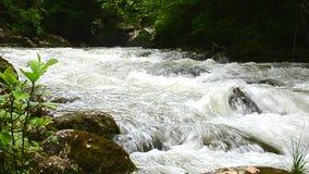 Langzame stroom van water in de bergrivier de kloof in van de Kaukasus, Guam, Mezmay stock video