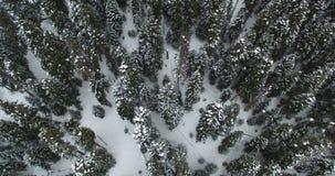 Langzame vlucht van de hommel over het naaldbos in de winter in 4K stock footage