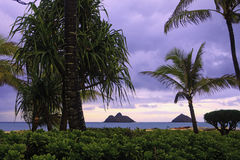 Lanikai beach with palm trees Stock Photos