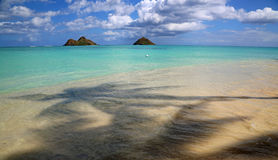 Lanikai beach  - view from under palm tree Stock Image