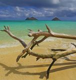 Lanikai Hawaii Ocean Panoramic Royalty Free Stock Image