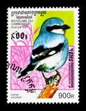Lanius excubitor nordico di laniere, serie degli uccelli, circa 1997 Fotografia Stock Libera da Diritti