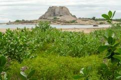 lanka国家公园sri yala 免版税库存照片