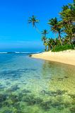 lanka переднего плана собаки пар пляжа смотрит sri к тропический гулять Стоковое Изображение RF