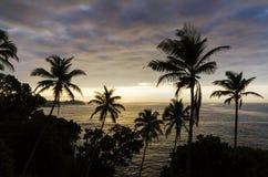 lanka переднего плана собаки пар пляжа смотрит sri к тропический гулять Стоковое Изображение
