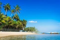 lankaen för förgrund för strandparhund ser sri till tropiskt gå Royaltyfri Foto