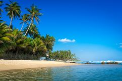 lankaen för förgrund för strandparhund ser sri till tropiskt gå Arkivfoto