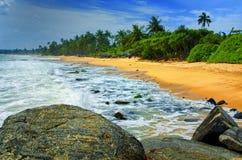 lankaen för förgrund för strandparhund ser sri till tropiskt gå Royaltyfri Bild
