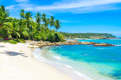 lankaen för förgrund för strandparhund ser sri till tropiskt gå Arkivbild