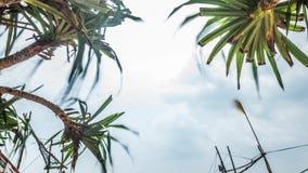 Lankijczyk plaży plandeka Łódkowaty Timelapse 4k zbiory