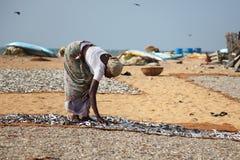 Lankijczyk tradycyjna metoda suszyć świeżej ryba Zdjęcia Stock