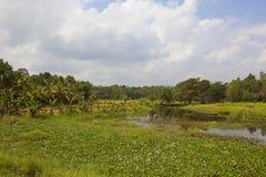 Lankijczyk wiejska ziemia uprawna Zdjęcia Royalty Free