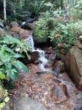 Lankijczyka ładny miejsce Obraz Royalty Free