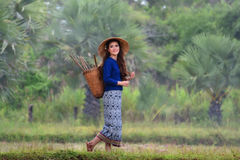 Lanna Lady Stock Photography