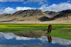 Lanscap Тибета Стоковые Фото