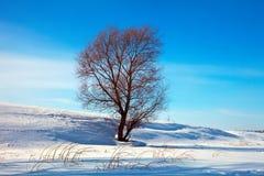 lanscape ενιαίος χειμώνας δέντρων Στοκ φωτογραφία με δικαίωμα ελεύθερης χρήσης