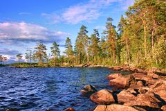 Lanscape με τη λίμνη και τα πεύκα Καρελία Στοκ εικόνα με δικαίωμα ελεύθερης χρήσης