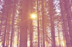Lanscape горы морозное, сцена зимы Стоковое Изображение