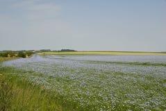 lanscape льна поля Стоковое Фото