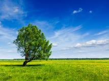 Lanscape пейзажа поля зеленого цвета лета весны с одиночным деревом Стоковое Изображение RF