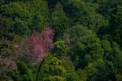 Lanscape astucieux de forêt de montagne images libres de droits