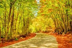 Lanscape av skogen i Montenegro Arkivbilder