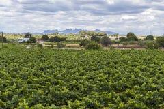Lanscape avec des vignobles, région cave de vin de Penedes, au fond M photographie stock libre de droits