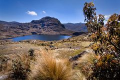 Lanscape in Cajas National Park Azuay Ecuador Stock Photography