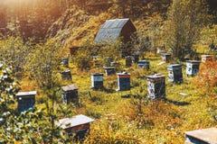Lanscape con el prado de la montaña con las colmenas Fotos de archivo libres de regalías