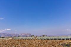 Lanscape d'agave de tequila image libre de droits