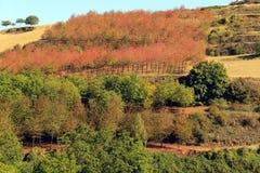 Lanscape das árvores Imagem de Stock Royalty Free
