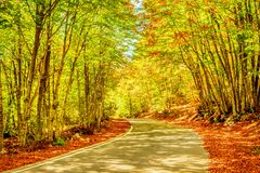 Lanscape de la forêt dans Monténégro images stock